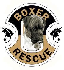 boxer_rescue_LA