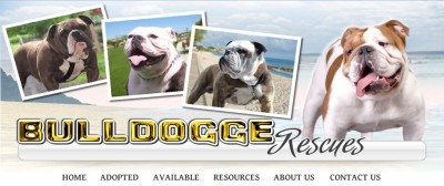 bulldoggerescue