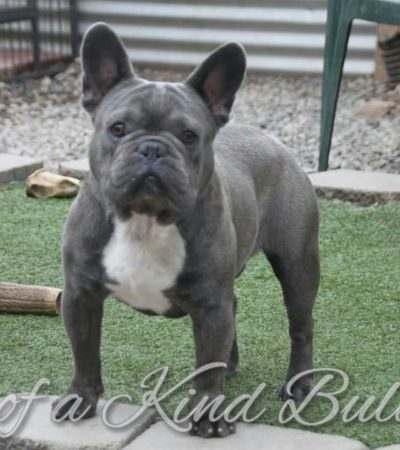Home One Of A Kind Bulldogs